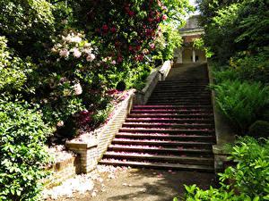 Фотографии Англия Парки Рододендрон Лондон Лестницы Кусты Лепестков Hill Garden Природа