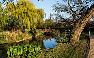 Фото Англия Парки Реки Лондоне Ствол дерева Дерево Природа
