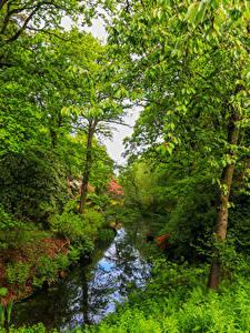 Картинка Англия Парк Речка Деревья Траве Ramster Gardens Surrey