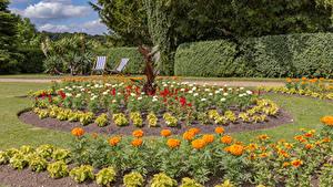 Обои Англия Парк Бархатцы Газон Кустов Hughenden Manor
