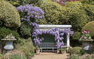 Обои для рабочего стола Англия Парки Вистерия Тюльпан Дизайн Кустов Скамья Ascott House gardens Природа