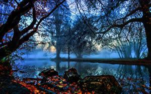 Фото Англия Реки Осенние Лондоне Деревья Тумана Ветки Morden Hall Park Природа