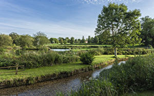 Фотографии Англия Река Кустов Деревья Stoke Charity River Dever Природа