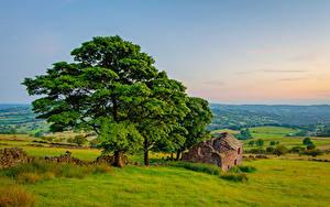 Картинка Англия Руины Пейзаж Деревья Peak District, Roach end Barn Природа