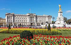 Фотографии Англия Тюльпаны Лондон Дворца Buckingham Palace, Victoria Memorial город