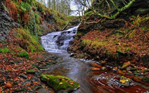 Фотография Англия Водопады Осень Камни Листва Ручей Dean Brook Waterfall  Rivington Природа