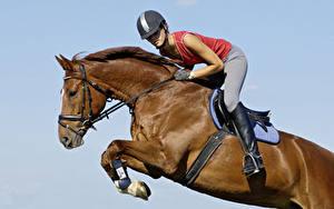 Картинка Верховая езда Лошади Шлема Прыгает спортивный Девушки