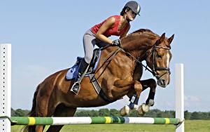 Картинка Конный спорт Лошадь Прыжок спортивные Девушки