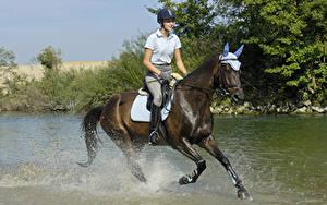 Картинка Верховая езда Лошади Воде Бегущая Брызги В шлеме спортивный Девушки