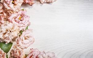 Фотография Эустома Доски Шаблон поздравительной открытки цветок