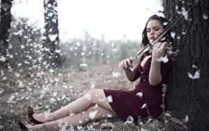 Картинка Перья Скрипки Ноги Сидит Платье молодые женщины