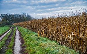Фото Поля Дороги Кукуруза Трава