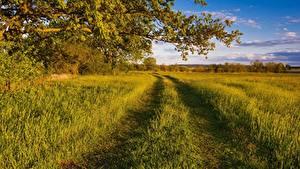 Фотография Поля Дороги Лето Ветки Трава