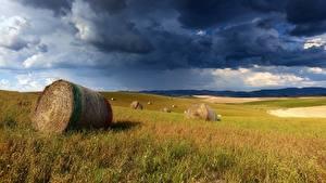 Фотографии Поля Туч Сене Облачно Трава
