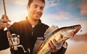 Фотография Рыбалка Рыбы Мужчины Zander Животные