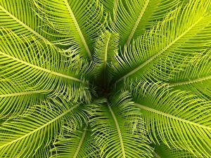 Фото Лист Пальмы Природа