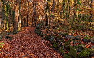 Картинки Лес Осень Камни Деревья Листья Мхом Природа