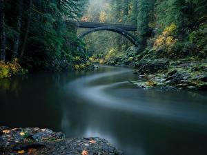 Фото Леса Река Мост Парк США Вашингтон Lewis River, Yacolt, Moulton Falls Regional Park