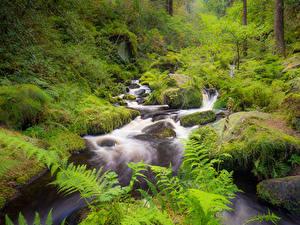 Фото Лес Реки Камни Англия Мха Wyming Brook, Sheffield Природа