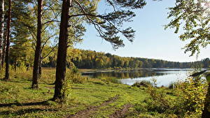 Обои Леса Речка Лето Сибирь Россия Деревья Траве Природа