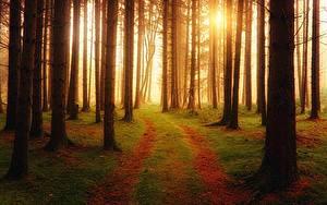 Обои для рабочего стола Лес Дороги Тумане Дерево Мха Природа