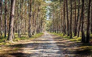 Картинки Лес Дороги Дерево