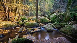 Фото Лес Камень Германия Мох Ручеек Бавария reserve Doost Природа