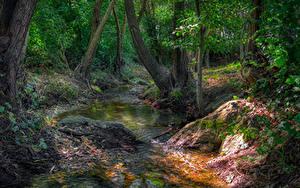 Картинки Лес Камень Дерево Ручей Природа