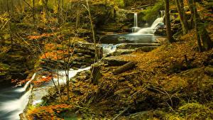 Картинки Леса Водопады Осенние Ручей Природа