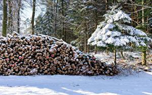 Фотография Леса Зима Ель Бревно Снега Природа
