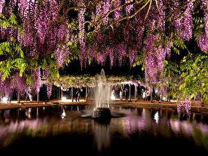 Фото Фонтаны Глициния Парки Ночные цветок