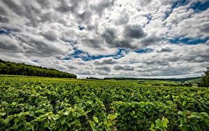 Фото Франция Поля Небо Виноградник Облака Кусты Dormans Природа