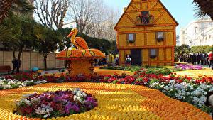 Фотография Франция Парки Цитрусовые Апельсин Мандарины Здания Аисты Дизайн Lemon Festival Menton Природа Еда