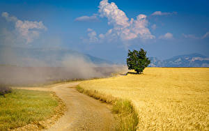 Картинка Франция Прованс Поля Дороги Деревья пыль