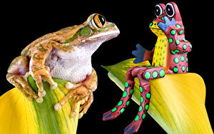 Картинка Лягушки Черный фон Двое Животные