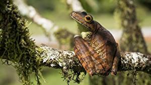 Фотография Лягушка Ветвь dendrobates животное