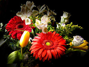 Фотографии Герберы Альстрёмерия Тюльпаны Лизантус Букет На черном фоне Цветы