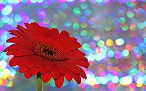 Картинки Гербера Вблизи Боке Красная цветок