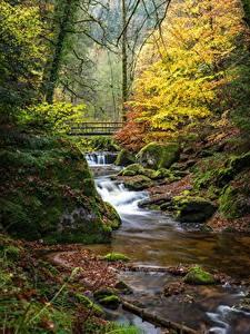Обои для рабочего стола Германия Осень Лес Мост Камни Ручеек Деревья Мха Black Forest, Baden-Baden Природа
