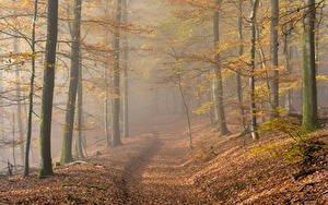Картинка Германия Осенние Леса Утро Тумане Листва Rheinland-Pfalz