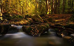 Картинки Германия Осенние Лес Камень Бавария Мхом Листья Ручей