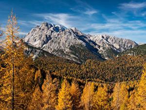 Фотографии Германия Осень Гора Леса Альп Мох Природа
