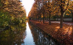 Фотографии Германия Осенние Парк Водный канал Дерево Листва Garden Schwetzingen Palace Природа