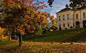 Картинки Германия Осень Парки Тыква Здания Деревья Листва Ludwigsburg Природа