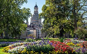 Картинка Германия Дрезден Здания Парк Дерева город