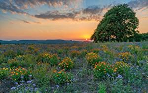Фото Германия Поля Луга Вечер Рассветы и закаты Дерева Солнца Klausen