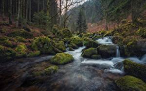 Картинка Германия Лес Реки Камни Мхом Деревьев Blackforest, Baden-Württemberg