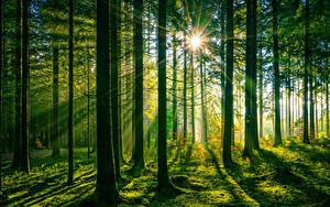 Картинки Германия Леса Деревья Лучи света Schwarzwald