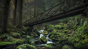 Картинка Германия Леса Камень Водопады Мох Ручей Ravennaschlucht Природа