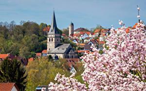 Фото Германия Здания Весенние Цветущие деревья Башни Крыша Warburg